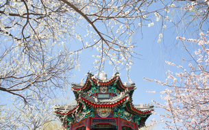 Low angle view of colourful roof of octagonal Chinese pavilion surrounded by trees with cherry blossの写真素材 [FYI02263729]