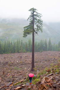 Rear view of person carrying pink umbrella standing in front of single tree in a forest clearing.の写真素材 [FYI02264074]