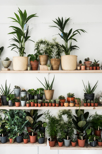 Large selection of plants in flowerpots on shelves in a plant shop.の写真素材 [FYI02264291]