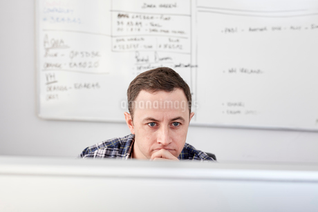 Man looking at a computer screen seated at his desk, with a project chart on the whiteboard behind.の写真素材 [FYI02264379]