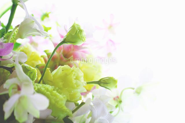 供花の写真素材 [FYI02264721]