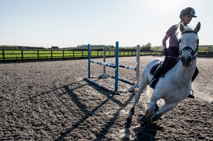 Teenage girl riding on a white horse in a paddock, taking a corner, horse moving at speed.の写真素材 [FYI02264774]