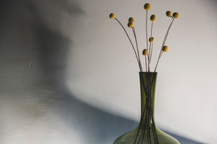 Close up of delicate dried Pineapple Flowers in green glass vase.の写真素材 [FYI02264868]