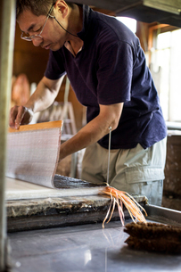 Japanese man in a workshop holding a sheet of dried pulp, making traditional Washi paper.の写真素材 [FYI02264881]