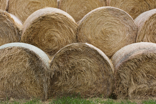 Stacked hay bales after the harvest, winter fodder for animals..の写真素材 [FYI02264906]