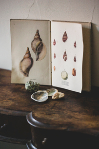 Close up of Venus Ear shells and vintage card with drawings of sea shells on antique wooden table.の写真素材 [FYI02264970]