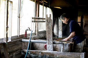Japanese man in a workshop leaning over a vat of liquid, the traditional Washi papermaking process.の写真素材 [FYI02264983]
