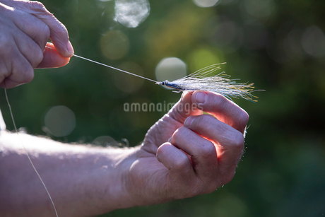 A close up of a fly fisherman tying a new feathery fishing fly onto his line for use in salt water.の写真素材 [FYI02264986]