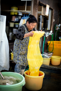 Japanese woman standing in a textile plant dye workshop, holding piece of bright yellow fabric.の写真素材 [FYI02265024]