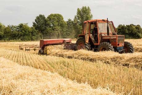 Tractor and straw baler in wheat field, farmer baling straw.の写真素材 [FYI02265052]