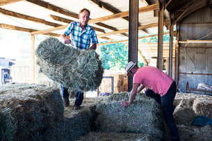 Two farmers stacking hay bales in a barn.の写真素材 [FYI02265059]