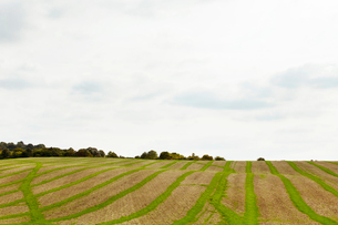 Farmland landscape in August, a rolling landscape with green and brown fields, green crop growing inの写真素材 [FYI02265114]