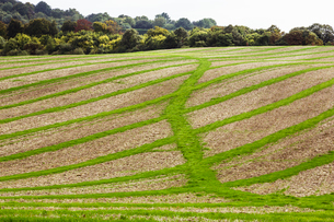 Farmland landscape in August, a rolling landscape with green and brown fields, green crop growing inの写真素材 [FYI02265121]