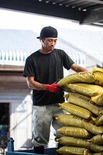 Japanese farmer wearing black cap stacking yellow plastic sacks.の写真素材 [FYI02265126]