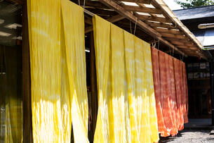 Freshly dyed bright yellow and orange fabric hanging outside a textile plant dye workshop.の写真素材 [FYI02265146]