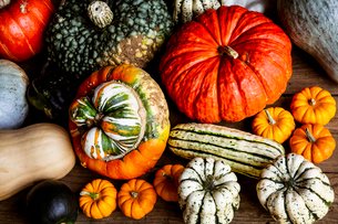 High angle close up of a selection of pumpkins and squash.の写真素材 [FYI02265159]