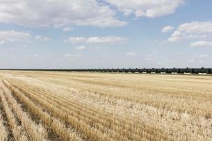 Oil train cars and fallow farmland, near Swift Current, Saskatchewan, Canada.の写真素材 [FYI02265181]