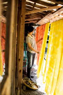 Japanese woman standing outside a textile plant dye workshop, hanging up freshly dyed bright yellowの写真素材 [FYI02265183]