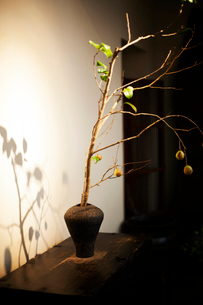 Close up of Ikebana arrangement in brown vase, branch with leaves and fruits.の写真素材 [FYI02265196]