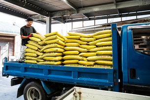 Japanese farmer wearing black cap standing on a blue truck, stacking yellow plastic sacks.の写真素材 [FYI02265265]