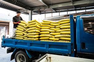 Japanese farmer wearing black cap standing on a blue truck, stacking yellow plastic sacks.の写真素材 [FYI02265265]