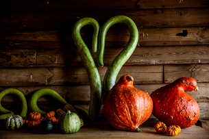 Close up of a selection of green and orange pumpkins on wooden shelf.の写真素材 [FYI02265283]