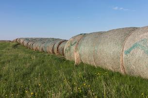 Row of hay bales, near Climax, Saskatchewan, Canada.の写真素材 [FYI02265308]