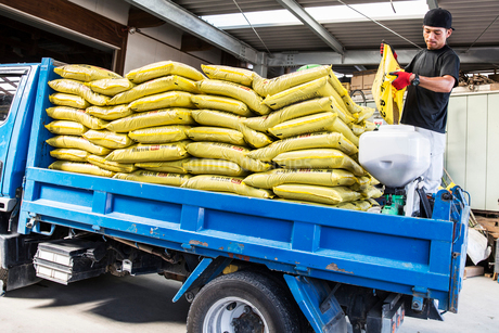 Japanese farmer wearing black cap standing on a blue truck, stacking yellow plastic sacks.の写真素材 [FYI02265343]