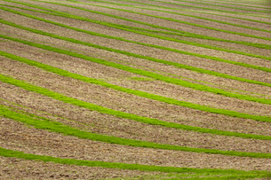 Farmland landscape in August, a rolling landscape with green and brown fields, green crop growing inの写真素材 [FYI02265400]