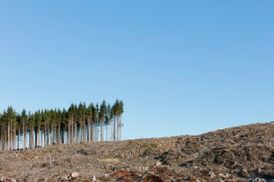 Small stand of trees on the brow of a hill, surrounded by extensive cleared woodland in a national fの写真素材 [FYI02265409]