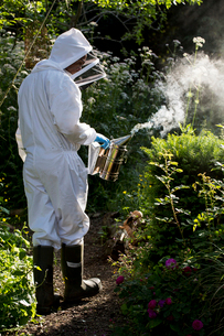 Beekeeper wearing protective suit at work, using smoker to calm bees.の写真素材 [FYI02265425]