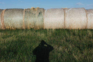 Row of hay bales, photographer's shadow in foreground, near Climax, Saskatchewan, Canada.の写真素材 [FYI02265437]