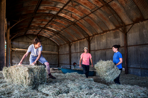 Three farmers stacking hay bales in a barn.の写真素材 [FYI02265455]