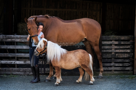 Woman standing outside stable, holding brown horse and a Shetland pony by their bridles.の写真素材 [FYI02265471]