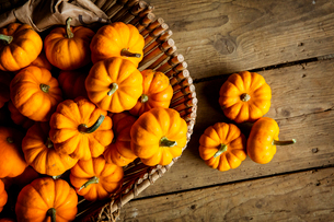 High angle close up of a selection of small bright orange pumpkins.の写真素材 [FYI02265562]