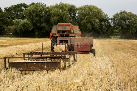 Tractor and straw baler in wheat field, farmer baling straw.の写真素材 [FYI02265566]