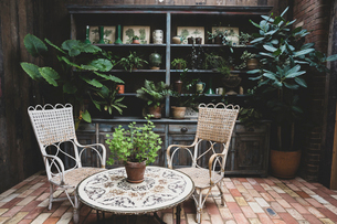 Garden room with vintage wicker chairs and table and a selection of indoor plants in terracotta potsの写真素材 [FYI02265590]