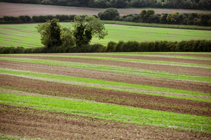 Farmland landscape in August, a rolling landscape with green and brown fields, green crop growing inの写真素材 [FYI02265620]