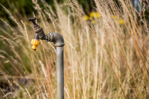 Close up of water tap with yellow plastic hose attachment in an allotment.の写真素材 [FYI02265718]