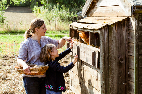 Woman and girl collecting eggs from a chicken house.の写真素材 [FYI02265724]