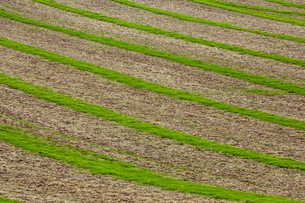 Farmland landscape in August, a rolling landscape with green and brown fields, green crop growing inの写真素材 [FYI02265741]