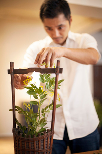 Japanese man working in a flower gallery, working on Ikebana arrangement.の写真素材 [FYI02265744]