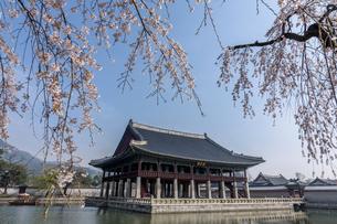 Exterior view of Gyeonghoeru Pavilion and lake in Gyeongbok Palace, Seoul, South Korea.の写真素材 [FYI02265760]