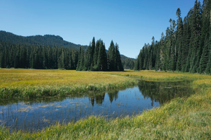 Bumping River flowing through alpine meadow and forest along the Pacific Crest Trail in the Cascadesの写真素材 [FYI02265772]