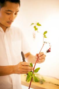 Japanese man standing in flower gallery, working on Ikebana arrangement.の写真素材 [FYI02265812]