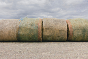Stacked hay bales after the harvest, winter fodder for animals..の写真素材 [FYI02265863]