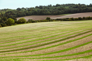 Farmland landscape in August, a rolling landscape with green and brown fields, green crop growing inの写真素材 [FYI02265869]