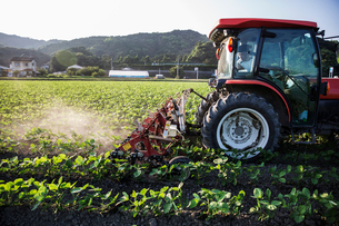 Japanese farmer driving red tractor through a field of soy bean plants.の写真素材 [FYI02265896]