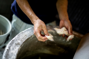 Man's hands separating pieces of vegetable fibres to make traditional Washi paper.の写真素材 [FYI02265903]