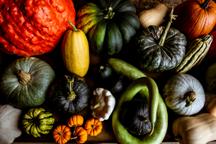High angle close up of a selection of pumpkins and squash.の写真素材 [FYI02265921]
